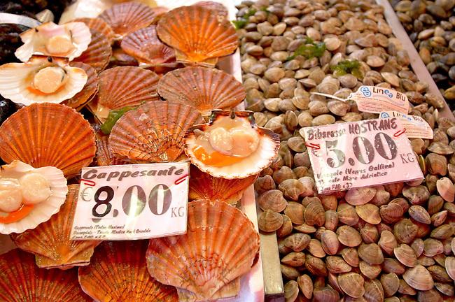 Fresh Shell fish - clams, scallops - Chioggia - Venice Italy