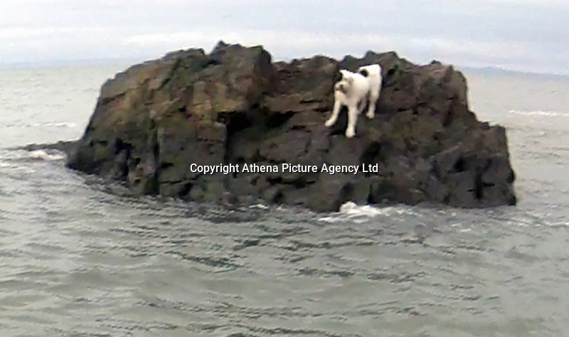 MUST BYLINE JOSH STEWART/RNLI/VIA ATHENA PICTURES<br /> Pictured: Charlie the dog is being rescued by an RNLI crew after getting stranded on a rock off Mumbles near Swansea, Wales. Saturday 15 April 2017<br /> Re: Saturday morning the volunteer crew of the Mumbles inshore lifeboat Mark Lott were called to the aid of a dog which had jumped onto a deserted rock.<br /> The dog 'Charlie' had escaped his owners and jumped from a ridge onto a rock in the middle of the rising tide. The crew were called in to return Charlie to his very grateful owners. <br /> Crew member Rhys John said 'We would urge all dog owners to keep their dogs on a lead while out on the cliff paths and always contact the Coastguard rather than try and rescue your dog yourself'.