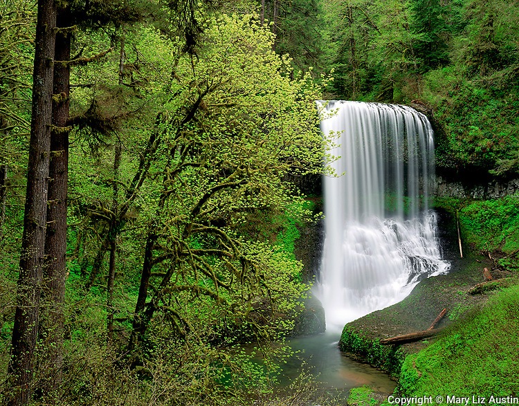 Silver Falls State Park, OR<br /> Middle North Falls (106 ft) in Silver Creek Canyon in early spring