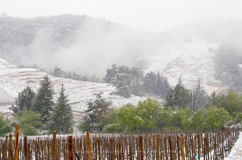 Cornas. Vineyards under snow in seasonably exceptional weather in April 2005.  Cornas, Ardeche, Ardèche, France, Europe