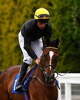 Antagonist ridden by Kieron Shoemark goes down to the start  of the  M J Church British EBF Novice Stakes (Plus 10) (Div 2),  during Afternoon Racing at Salisbury Racecourse on 7th August 2017