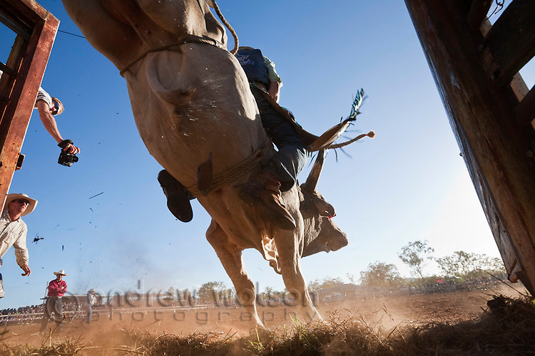 Low angle view of bull rider entering arena at Mt Garnet Rodeo.  Mt Garnet, Queensland, Australia