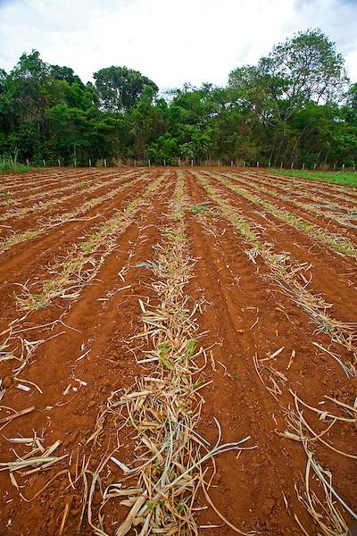 Sao Jose do Rio Preto_SP, Brasil...Programa Biota da Unesp, na foto agricultura...The Biota program of Unesp, in this photo the agriculture.. .Foto: JOAO MARCOS ROSA /  NITRO