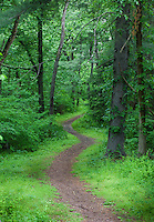 Forest Trail, Lumberton, New Jersey