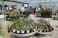 Harrison's Garden Centre, Greyabbey, Co Down, N Ireland, 201208180525..Copyright Image from Victor Patterson, 54 Dorchester Park, Belfast, UK, BT9 6RJ..Tel: +44 28 9066 1296.Mob: +44 7802 353836.Voicemail +44 20 8816 7153.Skype: victorpattersonbelfast.Email: victorpatterson@me.com.Email: victorpatterson@ireland.com (back-up)..IMPORTANT: If you wish to use this image or any other of my images please go to www.victorpatterson.com and click on the Terms & Conditions. Then contact me by email or phone with the reference number(s) of the image(s) concerned.