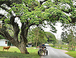 A father and son share a horse and buggy ride near Vinales, Cuba