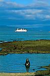 Otarie male devant le bateau de croisiere Santa Cruz