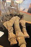 Dinosaur bones, BLM Visitor Center on Hwy 89