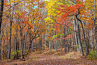 Autumn colors along a trail at Fairy Stone State Park near Philpott Lake, Virginia