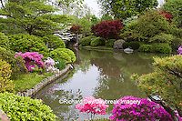 65021-03604 Bridge in Japanese Garden in spring, MO Botanical Gardens, St Louis, MO