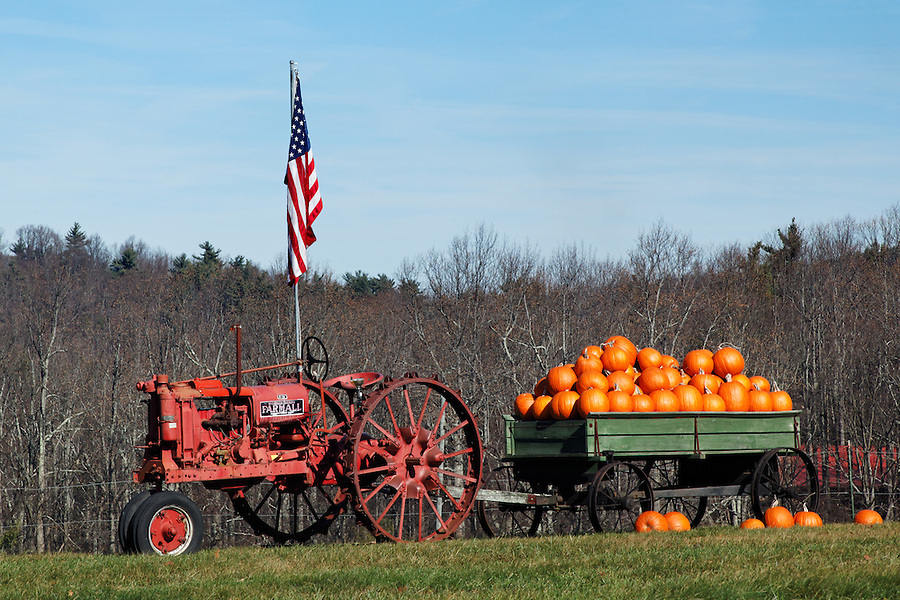 Red tractor and wagon full of pumpkins in field, Blue Ridge Parkway, Virginia, USA