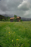 Stormy day cow shelter, Imst district, Tyrol/Tirol, Austria, Alps.
