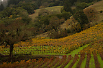 Vineyards in Northern California.
