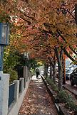 USA, Oregon, Ashland, a mand walks through a residental neighborhood on Hargadine Street in downtown Ashland