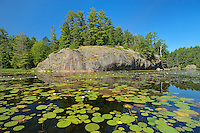 Water lilies, white [ine trees and precambrian rock at Freeland Lake<br /> Killarney Provincial Park<br /> Ontario<br /> Canada