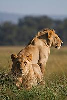 Mara Lions 17/02/16
