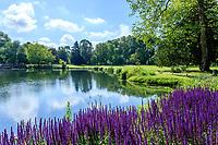 France, Indre-et-Loire (37), Azay-le-Rideau, parc et château d'Azay-le-Rideau au printemps et l'Indre aménagé en plan d'eau, sauges des bois 'Caradonna' (Salvia nemorosa 'Caradonna')