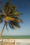 Asia, Vietnam, Nha Trang. Palm tree on Nha Trang's beach promenade Tran Phu.