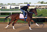 April 27, 2019 : Lady Apple works out at Churchill Downs, Louisville, Kentucky, preparing for a start in the Kentucky Oaks. Owner Phoenix Thoroughbred III and KatieRich Stables, trainer Steven M. Asmussen. By Curlin x Miss Mary Apples (Clever Trick)  Mary M. Meek/ESW/CSM