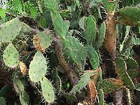 Cactus plants in jungle.