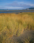 Curry County, OR<br /> Beach grasses cover low dunes of the esturary at the mouth of the Sixes river, Cape Blanco State Park