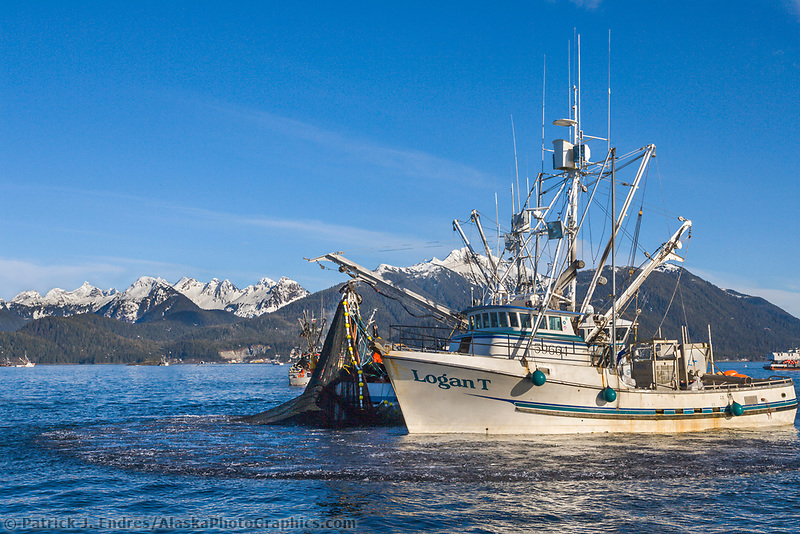 Commercial fishing vessel Logan T participates in the first 2006 Sitka Sac Roe Herring fishery opener on the north side of Middle island in Sitka Sound, March 2006.
