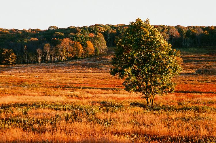 Big Meadows, Virginia, Fuji Velvia 35mm Film