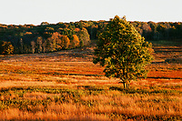Big Meadows, Virginia, Fuji Velvia 35mm Film