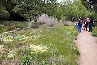 Visitors along path enjoying Menzies California native plant garden