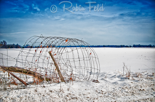 Country scene of rolled wire fence in snow