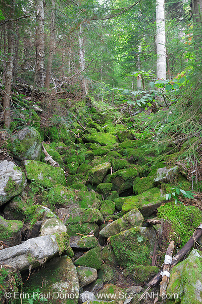 Abandoned sled road along the Gordon Pond Railroad on Mt. Waternomee in Kinsman Notch of the White Mountains, New Hampshire USA. This was a logging railroad in operation from 1907-1916 (+/-).