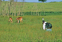 Photographer, photographing White-tailed deer, New Jersey