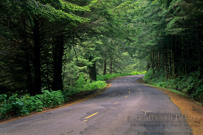 The Mattole Road, along the Lost Coast, Humboldt County, California