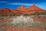 Travel:  Canyonlands Springtime