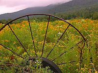 Wagon wheel in Vermont Mountains with mist, USA