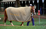 Note the Chou Croute blanket, another trainee of Dunham's.  1986 at Saratoga Race Course