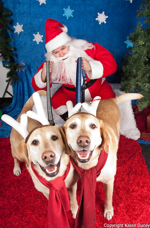 Santa Paws Holiday Photos Karen Ducey Multimedia