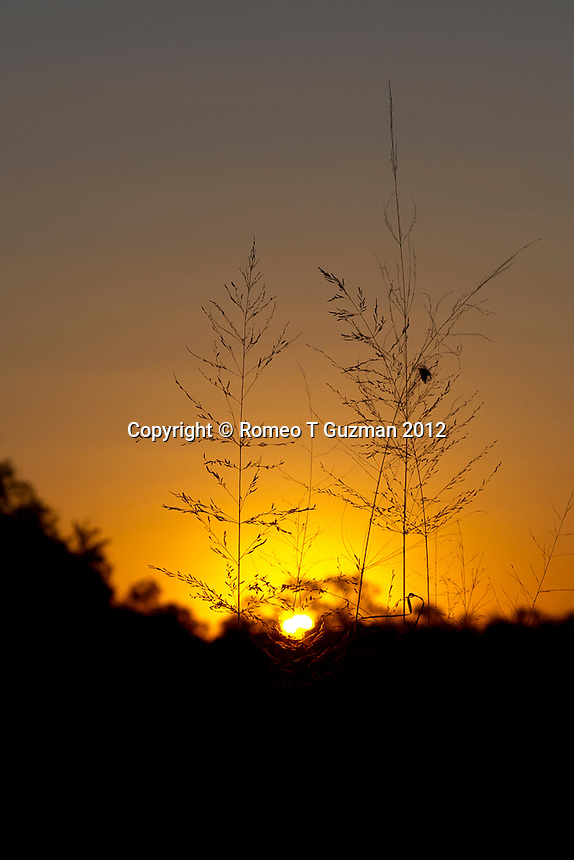 July 21, 2012: Evening Drive Skukuza in Kruger National Park in South Africa