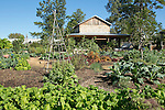 fall scenes in the Sarah P Duke Gardens<br /> <br /> vegetable garden at the Charlotte Brody Discovery Gardens