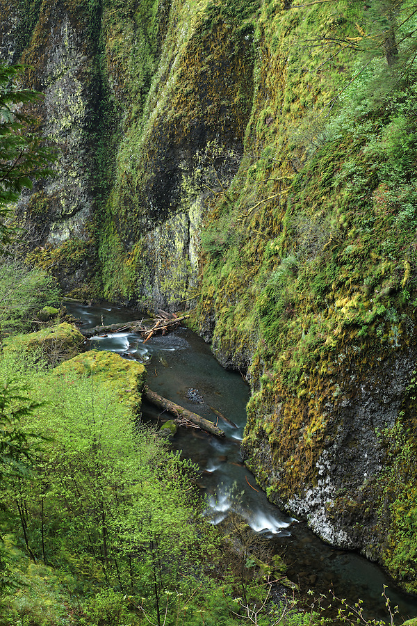 Multnomah Creek running through canyon, Columbia River Gorge National Scenic Area, Oregon, USA