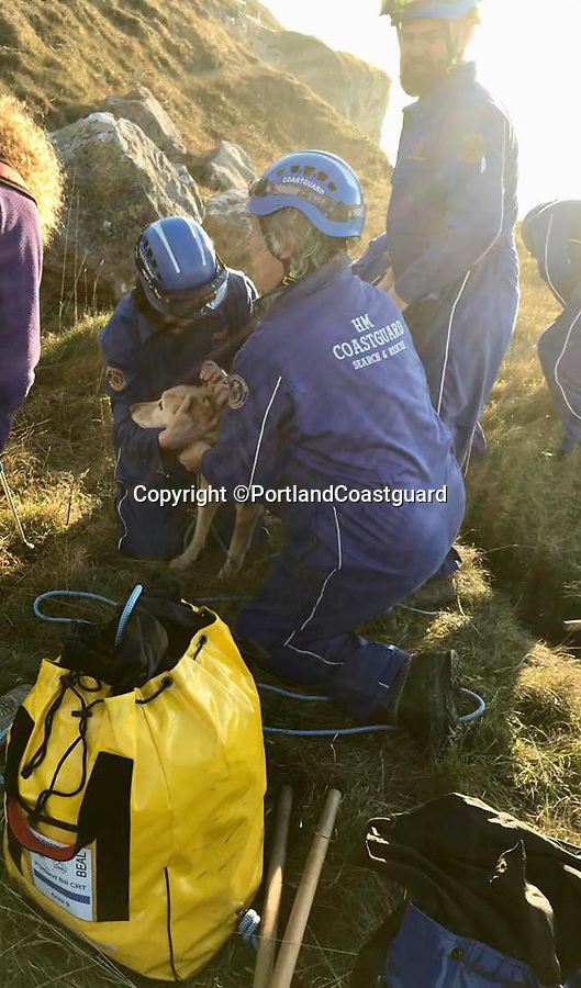 BNPS.co.uk (01202 558833)<br /> Pic: PortlandCoastguard/BNPS<br /> <br /> Coastguard rescue the trapped pooch.<br /> <br /> A dog miraculously escaped with 'just a few scratches' after falling 10ft down a crack.<br /> <br /> The Labrador Retriever was off its lead during a clifftop walk in Portland, Dorset, when he slipped through an 18ins gap in the earth.<br /> <br /> His panicked owner, an elderly man, called the coastguard who sent two teams to rescue the pet from the fissure.<br /> <br /> They lowered down some rope and looped it around the dog before coaxing him up to the surface.