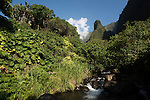 The stream of the Iao valley with the Needle on the back ground.