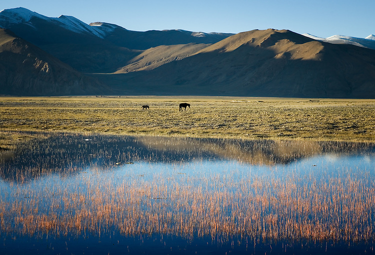 Shallow water pond and grasses in late afternoon, near Old Tingiri, Tibet.