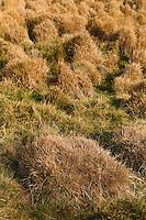 Plateau de Millevaches<br /> A proximité du ruisseau de Marcy