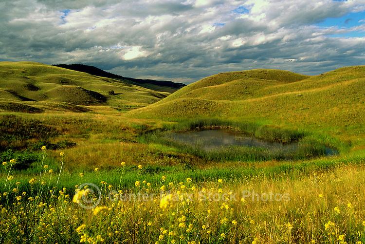 Upper Grassland, Lac du Bois Grasslands Park, near Kamloops, Thompson Okanagan Region, BC, British Columbia, Canada