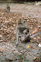 Indonesia, nature reserve of Pandangaran in Java island.<br /> Indonesia, riserva naturale di Pandangaran nell'isola di Giava.