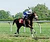 Little Miss Brown winning at Delaware Park on 8/28/14