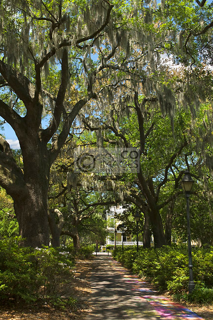 SIDEWALK ARTS FESTIVAL PATH FORSYTH PARK SAVANNAH GEORGIA USA