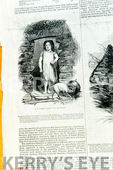 Famine Illustrations