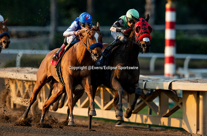 JAN 11: Queen Bee to You with Ruben Fuentes (green) battles with Der Lu and Drayden Van Dyke to win the La Canada Stakes at Santa Anita Park in Arcadia, California on January 11, 2020. Evers/Eclipse Sportswire/CSM
